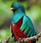 Ubuntu-12-10-Quantal-Quetzal